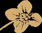 Rapsölblüte